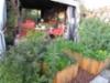 Vehreä puutarha