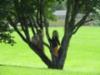 Neitoset puussa