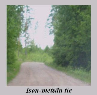 ison-metsan_tie.jpg