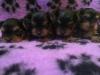 mangon_ja_roon_pennut_4vko