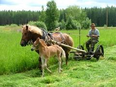 heinatoissa170708_hevosajopalvelut