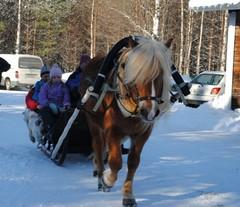 jalkalatoja1_hevosajopalvelut