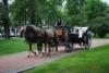 Puiston kautta