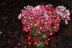 Kukka valoteos