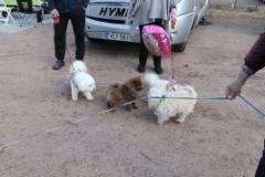 Peni (ruskea koira) yritti vappuheilaa.