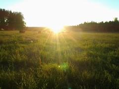 ilta_aurinko_niitylla
