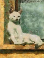 Oili Niittynen: Kissa Pals:n kylässä