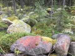 Mökin metsää kivikkoineen