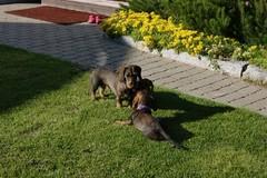 Miina ja Hertta
