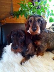 Metsäkruunun pojat Elmeri ja Dille