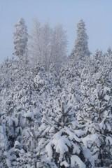 snowtrees_10jan10