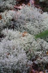 lichen_at_evo