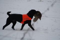 hauho_pheasant_hunt_dec8_2013_004