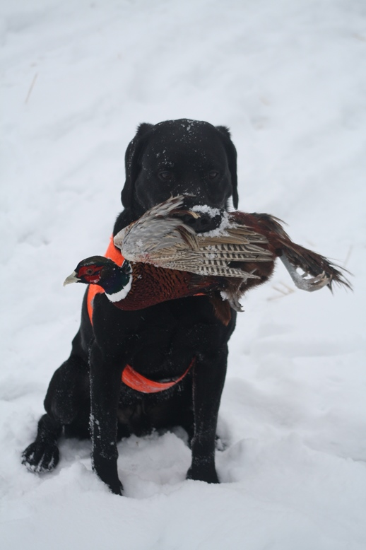 hauho_pheasant_hunt_dec8_2013_006.jpg