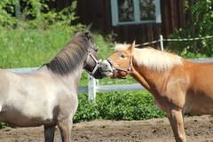 Ape ja Otto on kavereita!