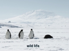 wild life at the south pole