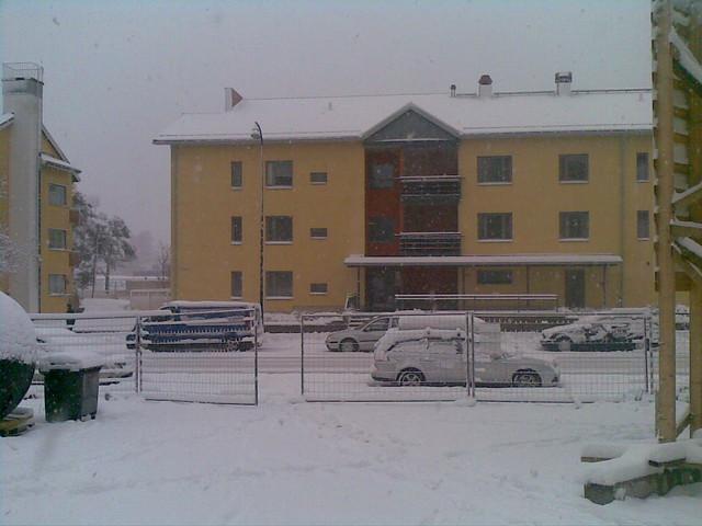 Talvinen Kotka