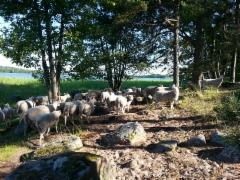 Sandholm-saaressa rauhallista