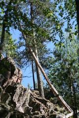 metsäinen_kallio