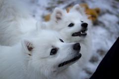 Ilya ja Elna 21.12.2014