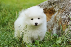 """Natural Dream Bewitched Snowball """"Huurre"""" (Pink) 6vk"""