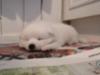 Natural Dream Castiel 2.3.2020 (5vk)