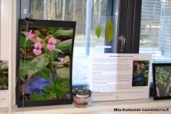 jattipalsamista_tietoa_luennolla_klaukkalassa_5.4.17_luontoturva.fi