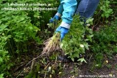 luontoturva.fi_lahdessa_kuntoillaan_ja_ulkoillaan_kitkien_jattipalsamia