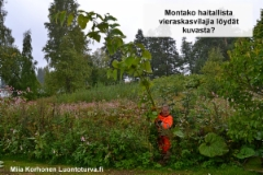 luontoturva.fi_montako_haitallista_vieraskasvilajia_loydat_kuvasta