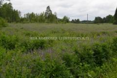 0151_rehuvuohenherne_voi_levita_luontoon_miia_korhonen_luontoturva.fi
