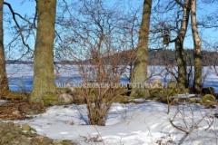 0486_terttuselja_leviaa_lintujen_levittamana_saaristoihin_miia_korhonen_luontoturva.fi