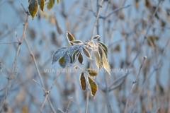 0488_terttuselja_talvi_miia_korhonen_luontoturva.fi