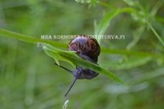 0510_lehtokotilo_kiipeilee_miia_korhonen_luontoturva.fi