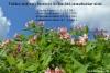 lahden_kirjastoissa_valokuvanayttely_luontoon_levinneista_puutarhankasveista_lahti_2018_luontoturva.fi
