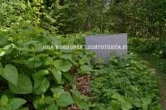 0615_puutarhajatekasasta_royhytatar_leviaa_luontoon_miia_korhonen_luontoturva.fi