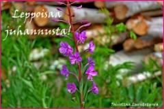 leppoisaa_juhannusta_toivottaa_luontoturva