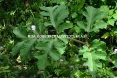 0644_ukonputken_lehti_miia_korhonen_luontoturva.fi