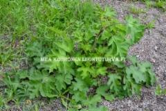 0651_idanukonputken_lehdet_miia_korhonen_luontoturva.fi