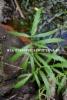 0665_myrkkykeison_lehti_miia_korhonen_luontoturva.fi