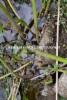 0671_myrkkykeison_varret_miia_korhonen_luontoturva.fi