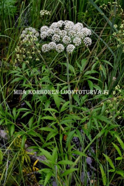0719_myrkkykeiso_miia_korhonen_luontoturva.fi