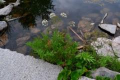 0725_myrkkykeiso_viihtyy_matalassa_vedessa_miia_korhonen_luontoturva.fi