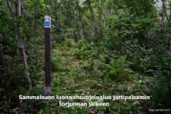 0741_sammalsuon_luonnonsuojelualue_lahdessa_jattipalsamin_torjunnan_jalkeen_miia_korhonen_luontoturva.fi