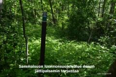 0740_sammalsuon_luonnonsuojelualue_lahdessa_ennen_jattipalsamin_torjuntaa_miia_korhonen_luontoturva.fi
