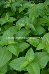 0768_laavaroyhytatar_leviaa_helposti_miia_korhonen_luontoturva.fi