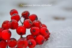 leppoisaa_talven_odotusta_toivottaa_luontoturva