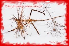iloa_ja_rauhaa_joulun_aikaan_toivottaa_luontoturva