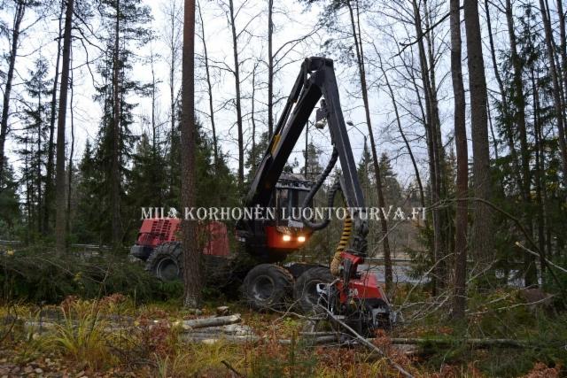 0795_tunnista_mahdolliset_haitallisten_vieraskasvien_leviamisen_vaylat_miia_korhonen_luontoturva.fi