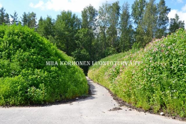 0799_maa-ainesten_mukana_siirtyvat_monet_lajit_uusille_alueille_miia_korhonen_luontoturva.fi