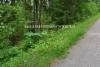 0810_tunnista_ja_torju_jattiputket_miia_korhonen_luontoturva.fi